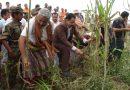 بحضور رسمي وشعبي كبير.. المؤسسة تدشن مهرجان حصاد الحبوب بوادي سردد