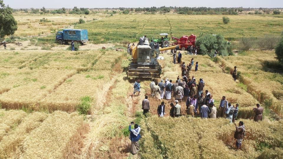 التدشين الحصاد (20)