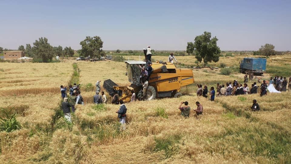 التدشين الحصاد (7)
